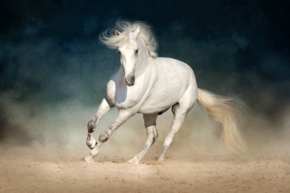 Arabian horse price