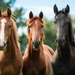 most expensive horse breeds in the world, expensive horse breeds