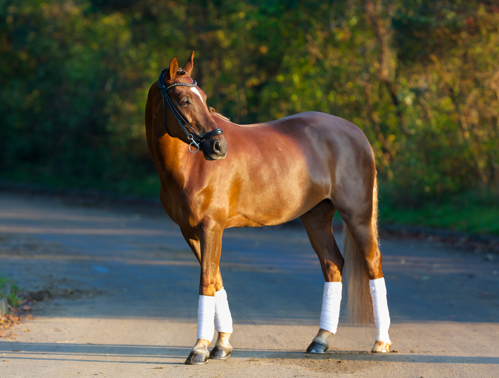 most expensive horse breed, expensive horse breeds