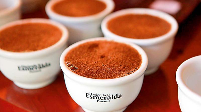 Expensive Coffees, Hacienda la Esmeralda (Panama) price