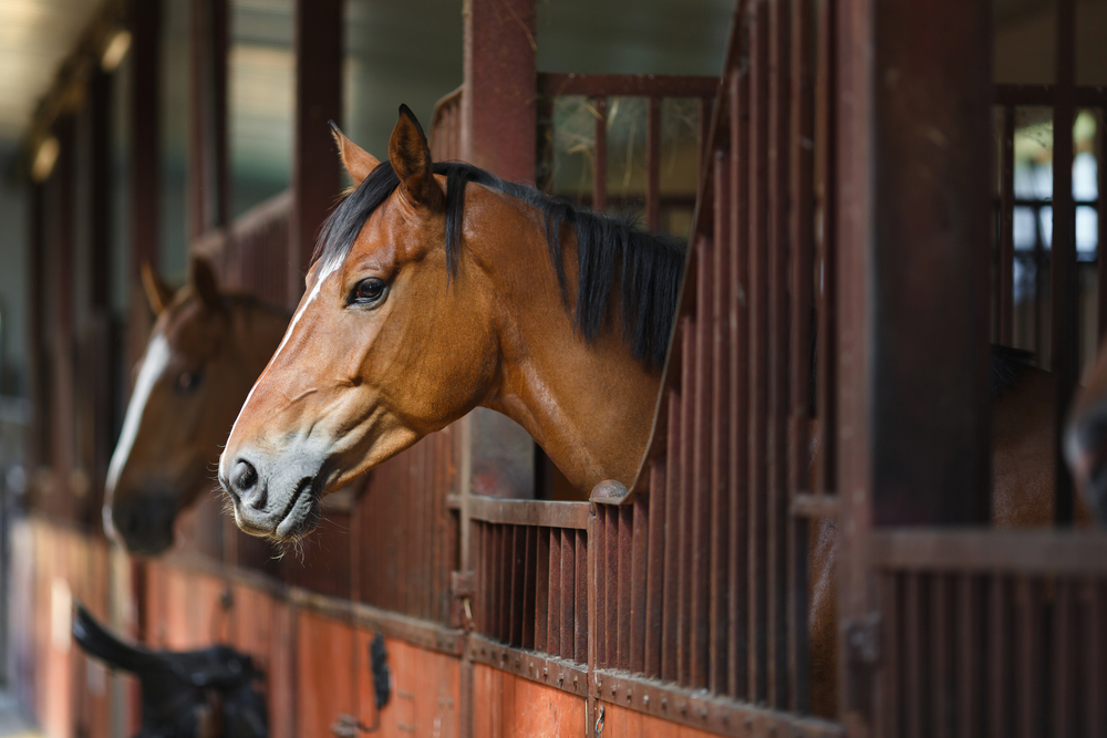 Board Horses In Your Own Stable, ways to make money with horses