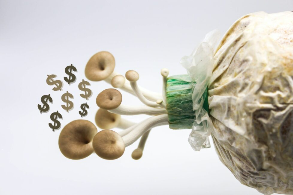 7 Steps To Growing Mushrooms For Profit