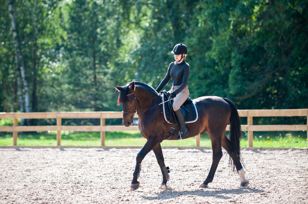 leasing your horse
