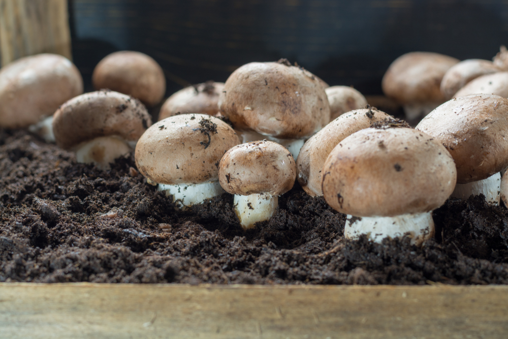 best climate for growing mushrooms