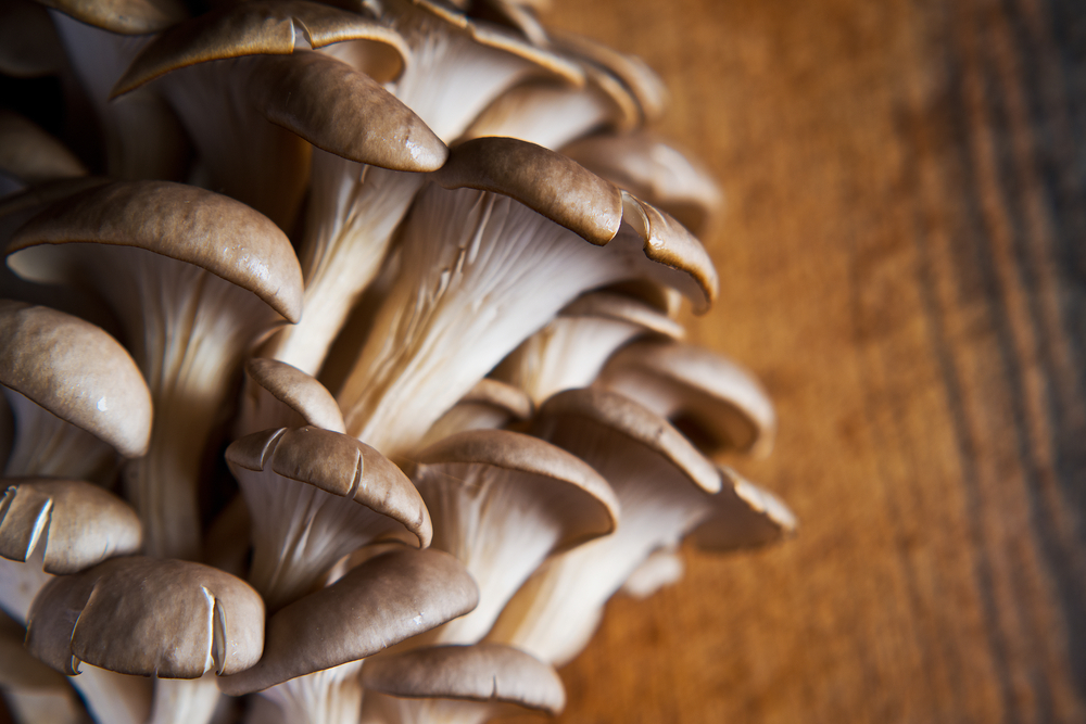 growing oyster mushrooms for profit