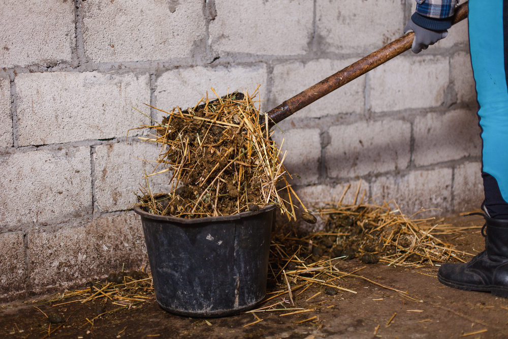 Horse manure removal business